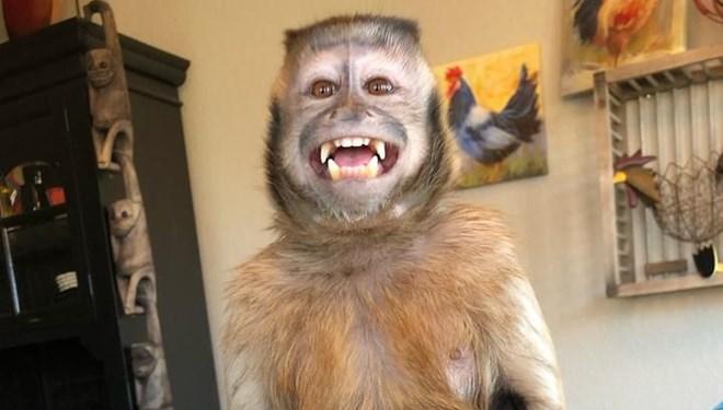 17,6 Milyon Takipçisi Olan Fenomen Maymun George Yaşamını Yitirdi